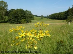 Juli Die blühende Rechtalswiese bei Asbach